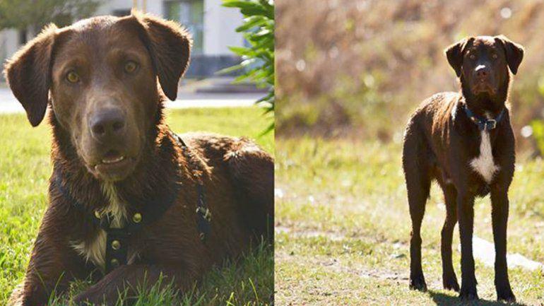Un cipoleño sale a silbar todos los días para hallar a su perro Jimmy