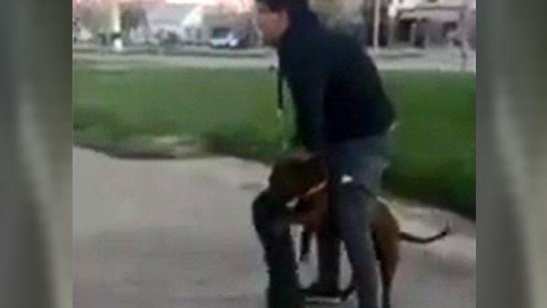 La agresión de un pitbull causó una gran indignación