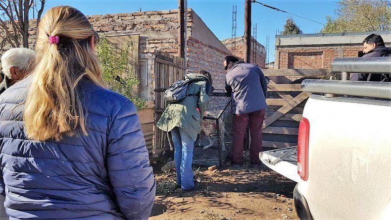 Tenía 4 perros atados en una obra sin agua ni comida y fue condenado por la Justicia