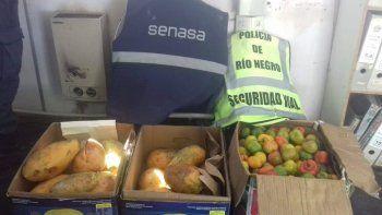 secuestran 80 kilos de frutas exoticas con destino a cipo