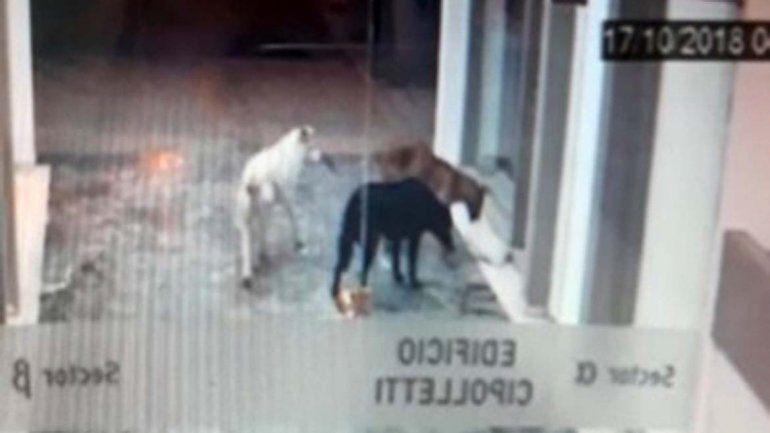 El ladrón menos pensado: mirá quién robaba los diarios en Cipo