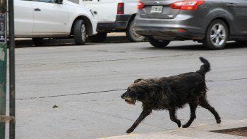 denuncian que un vecino dispara balinazos a perros