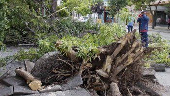 Un camión arrancó un árbol y casi provoca una tragedia