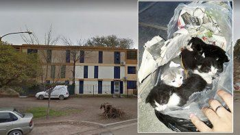 encontraron 4 gatitos recien nacidos con vida en una bolsa