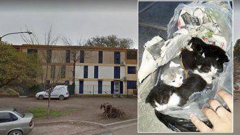 buscan mama nodriza para los gatitos abandonados