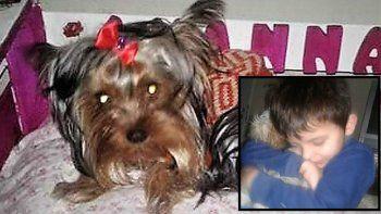 ofrecian $50 mil para recuperar a su perrita, pero fue atropellada