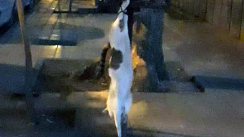 Internaron al temible asesino serial de gatos