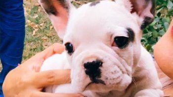 insolito allanamiento: encontraron a una perrita que habia sido robada