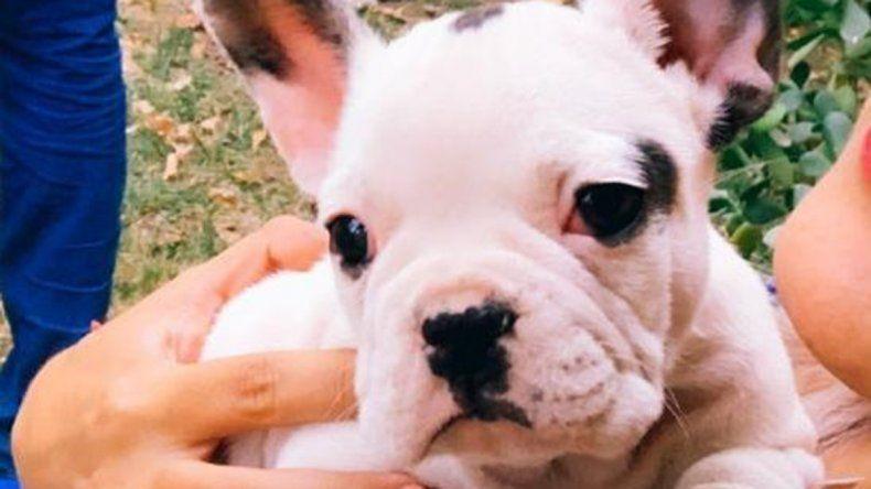 Insólito allanamiento: encontraron a una perrita que había sido robada