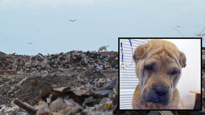 Crueldad animal: sus dueños la abandonaron en el basural y casi muere por su grave estado