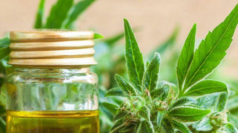 Pica respaldó la producción de cannabis medicinal en Río Negro