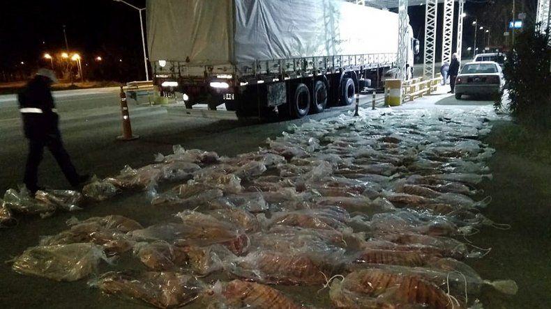 Decomisan más de una tonelada de carne ilegal y panceta