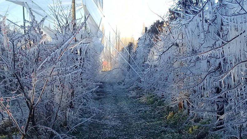 Una helada de 14 horas castigó a la fruticultura