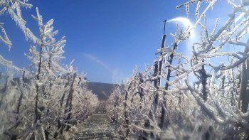 heladas: productores regionales temen danos graves