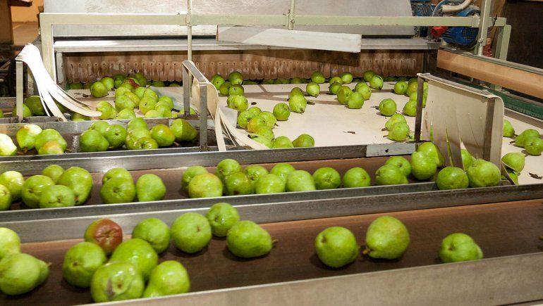 En Fruticultura no les tienen miedo a las peras de China