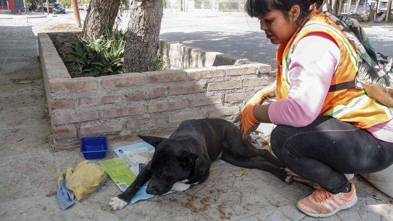 Un motociclista borracho atropelló a un perro, lo dejó abandonado y murió