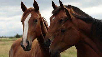 isla jordan: vecinos se quejan por caballos sueltos