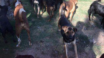 guarderia canina: los perros comen ratas para subsistir
