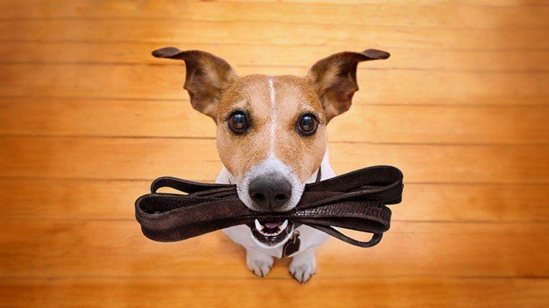 ¿Se puede sacar a pasear mascotas durante la cuarentena?