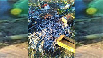 bronca: tiraron cientos de pescados en un basurero clandestino