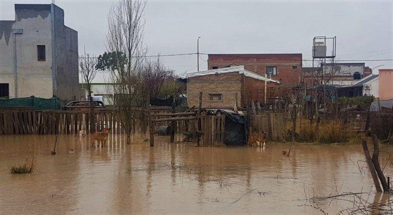 Salvaron a dos perros de morir ahogados en Fernández Oro
