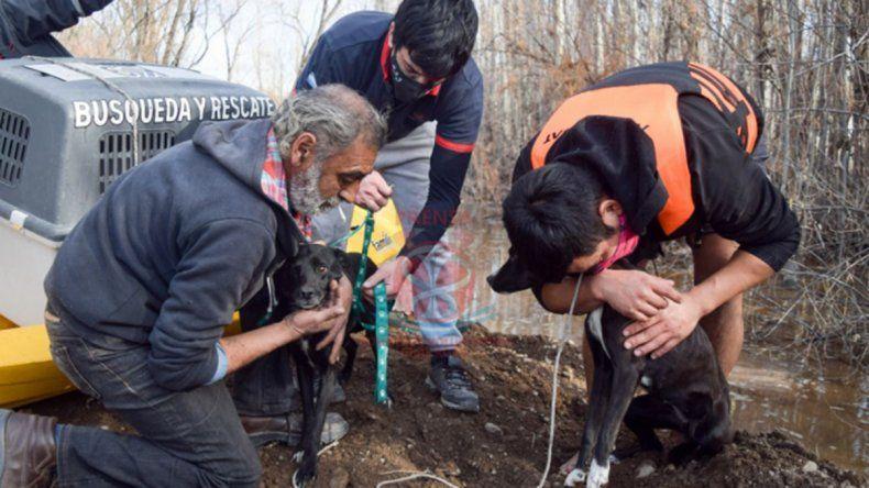 Increíble operativo de rescate de tres perros aislados por la crecida del río
