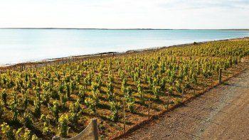 una nueva frontera para el vino argentino: el mar