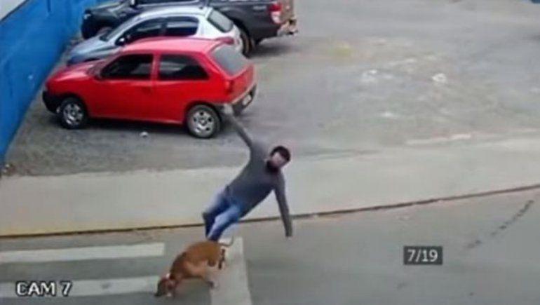 Perro atropelló a un hombre que cruzaba la calle y se volvió viral.