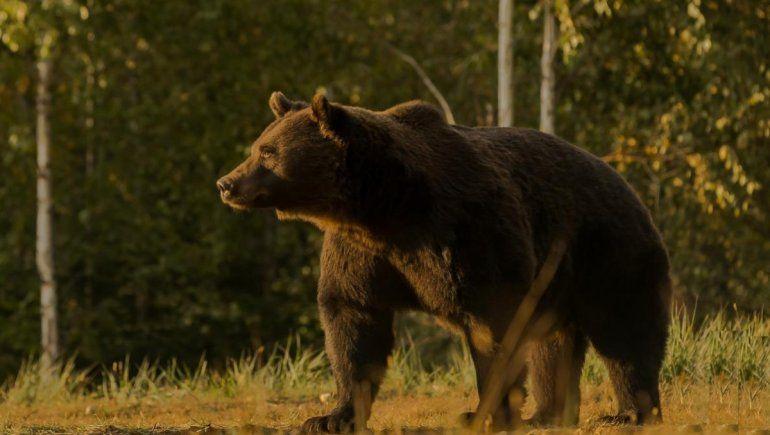 Viral: príncipe es acusado de matar al oso más grande de Europa