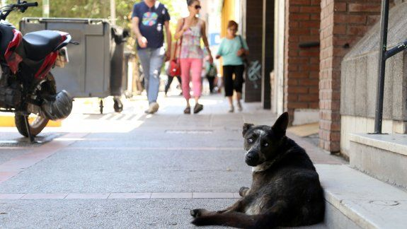 El proyecto de crear un hospital público veterinario contempla guardias las 24 horas y la creación de una Dirección de Salud Animal que se ocupe de las campañas de esterilización y adopción.