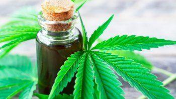 impulsan la legislacion del cannabis medicinal en la provincia