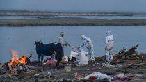 mientras india supero los 250 mil muertos, lograron rescatar cadaveres del rio