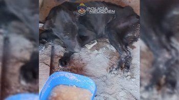 Tras un allanamiento, rescataron a un perro maltratado