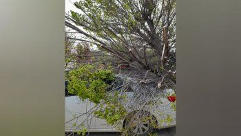 Árboles, carteles y hasta un semáforo caídos por las ráfagas de viento