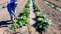 el chanar apuesta a diversificar, sumar productores e impulsar la agricultura familiar