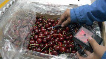 la temporada de cerezas termino con un incremento en el volumen exportado
