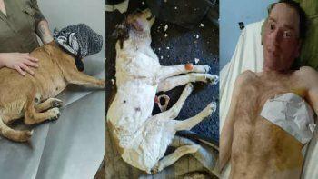guerra de inquilinos: le perforaron un pulmon y mataron a su perro