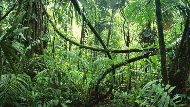 Las selvas tropicales surgieron tras el meteorito exterminador