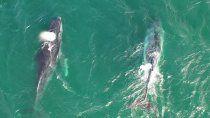 ballenas de distintas especies ya se observan en las grutas