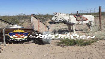 Los sorprendieron robando cables: un caballo, el único testigo