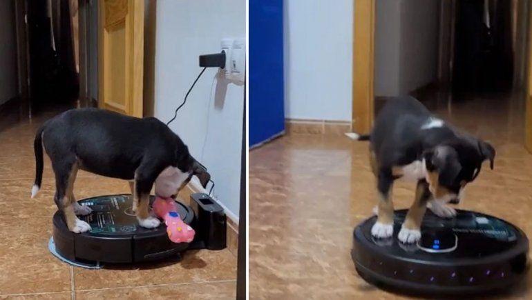 Facebook: perrito prendió por error aspiradora y se asustó con su movimiento.
