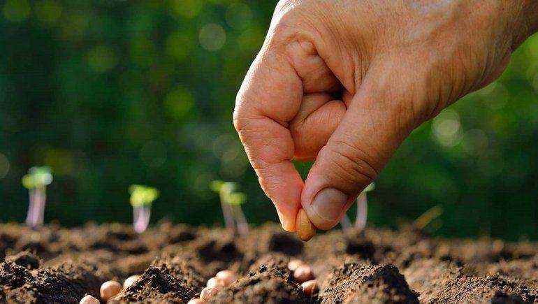 ¿Qué significa soñar con sembrar?