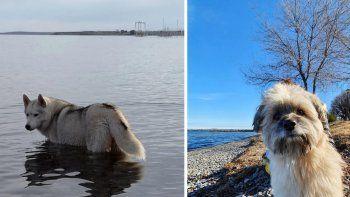 Desesperada búsqueda de dos perros perdidos en la Villa Mari Menuco