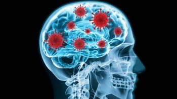 descubrieron como el coronavirus logra entrar en el cerebro
