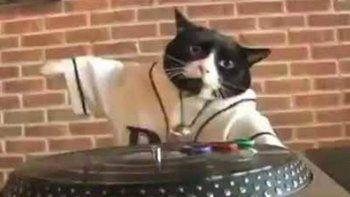 Viral: vecinos denunciaron una fiesta organizada por un gato