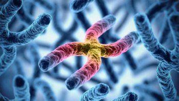 investigadores afirman haber secuenciado todo el genoma humano