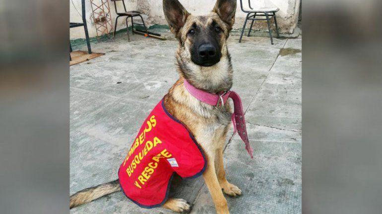 Todavía no encuentran a Roma, la perra que buscaba a un hombre en Huincul