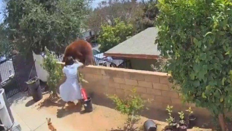 Viral: mujer se enfrenta con una osa por sus perros