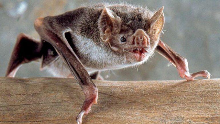 Los murciélagos no son los malos de la película