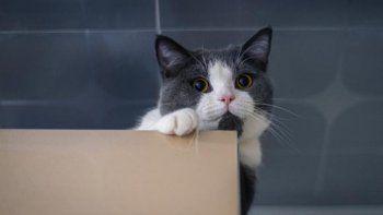 TikTok: joven enseñó a su gato un divertido truco para apagar la luz.